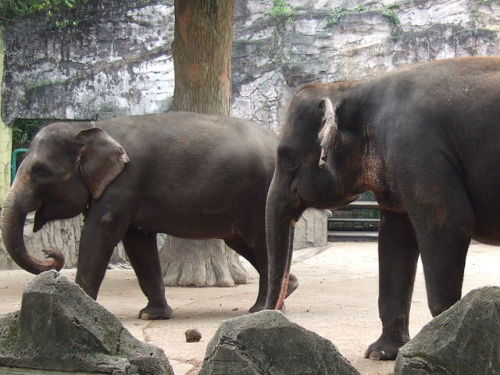 discoverynews:  Endangered Elephants Poisoned A recent elephant poisoning wasn't a case of a poor farmer defending his crops. The dead elephants were found on a state-owned plantation. keep reading  This is so upsetting to read. Just terrible.