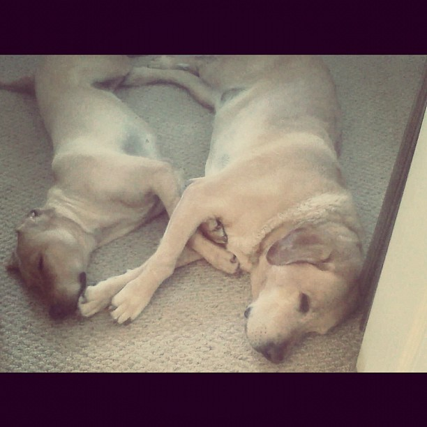 Sometimes they love each other (Taken with instagram)