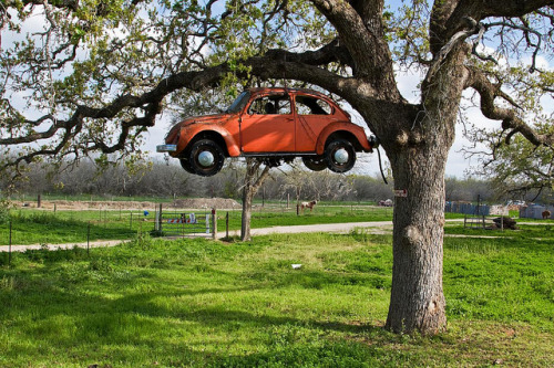 imprecise:  (via The Love Bug Tree | Flickr - Photo Sharing!)