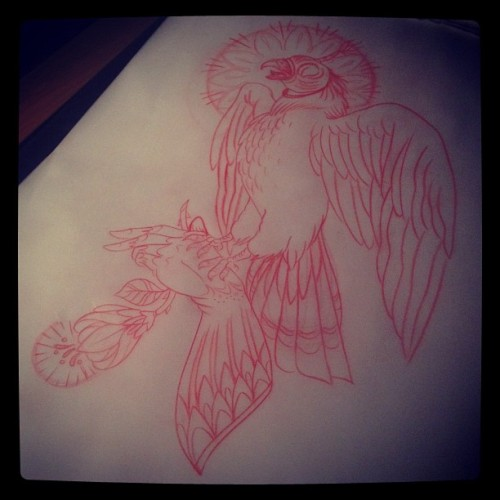 lauren-houlihan:  The suspicious falcon. Kaw kaw (Taken with instagram)