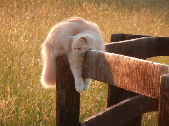 lori-rocks:  I'll just hang out here via cutest paw
