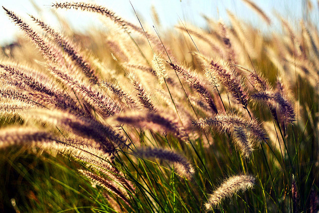 socialsurvival:  Blowin' in the wind by Little Thoughts on Flickr.