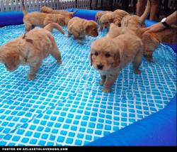 imgur Puppy pool party…come join us!! Original Article