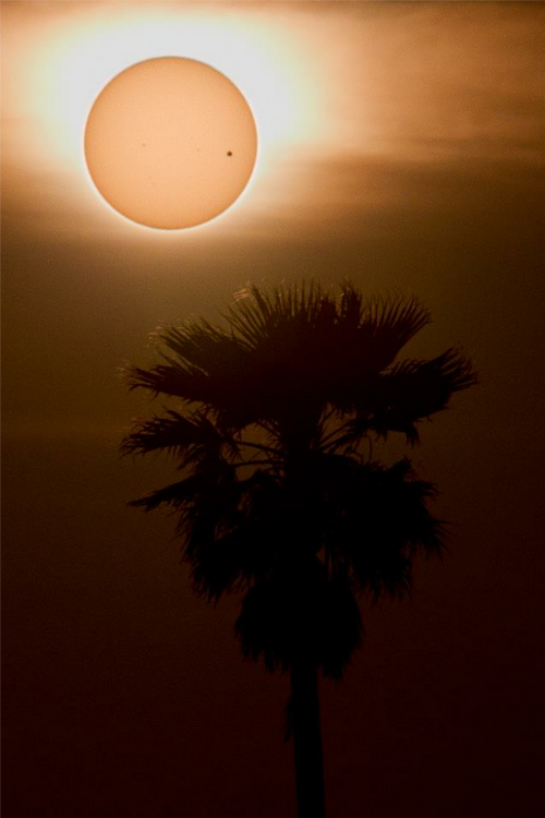 taylorthasailor:   Transit of Venus photographed in California