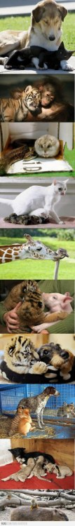 9GAG - Some Unexpected Friendships on We Heart It. http://weheartit.com/entry/30010332