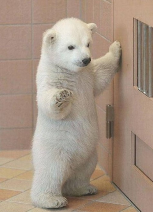 I'm this Big :) via:cutestpaw