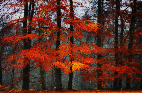"troubled:  ""Red Autumn"""