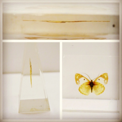 Beautiful vintage lucite pressed butterfly paperweight now available at Topshelfvintage1.etsy.com