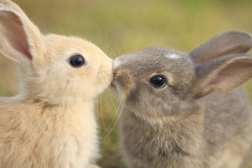 …kissing bunnies…