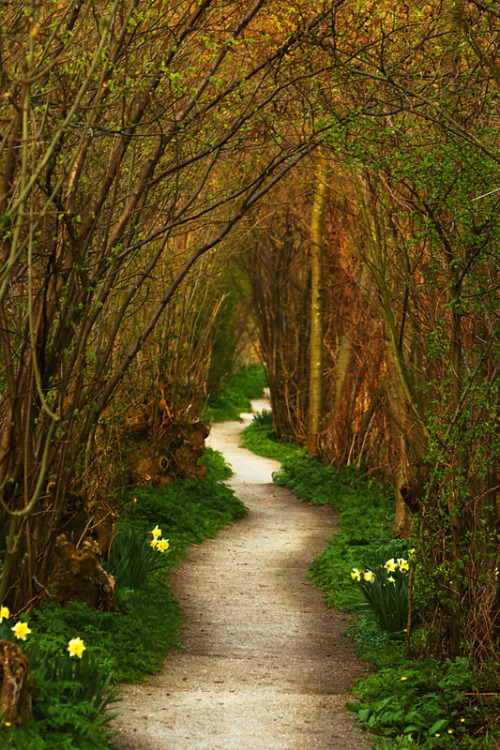 magicalnaturetour:  The Winding Path, a photo by Pepijn Sauer (agnostic) :)