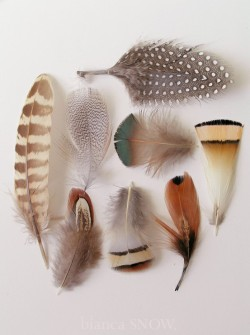 petitcabinetdecuriosites:  (via Collections / feathers ~ Bianca Snow)