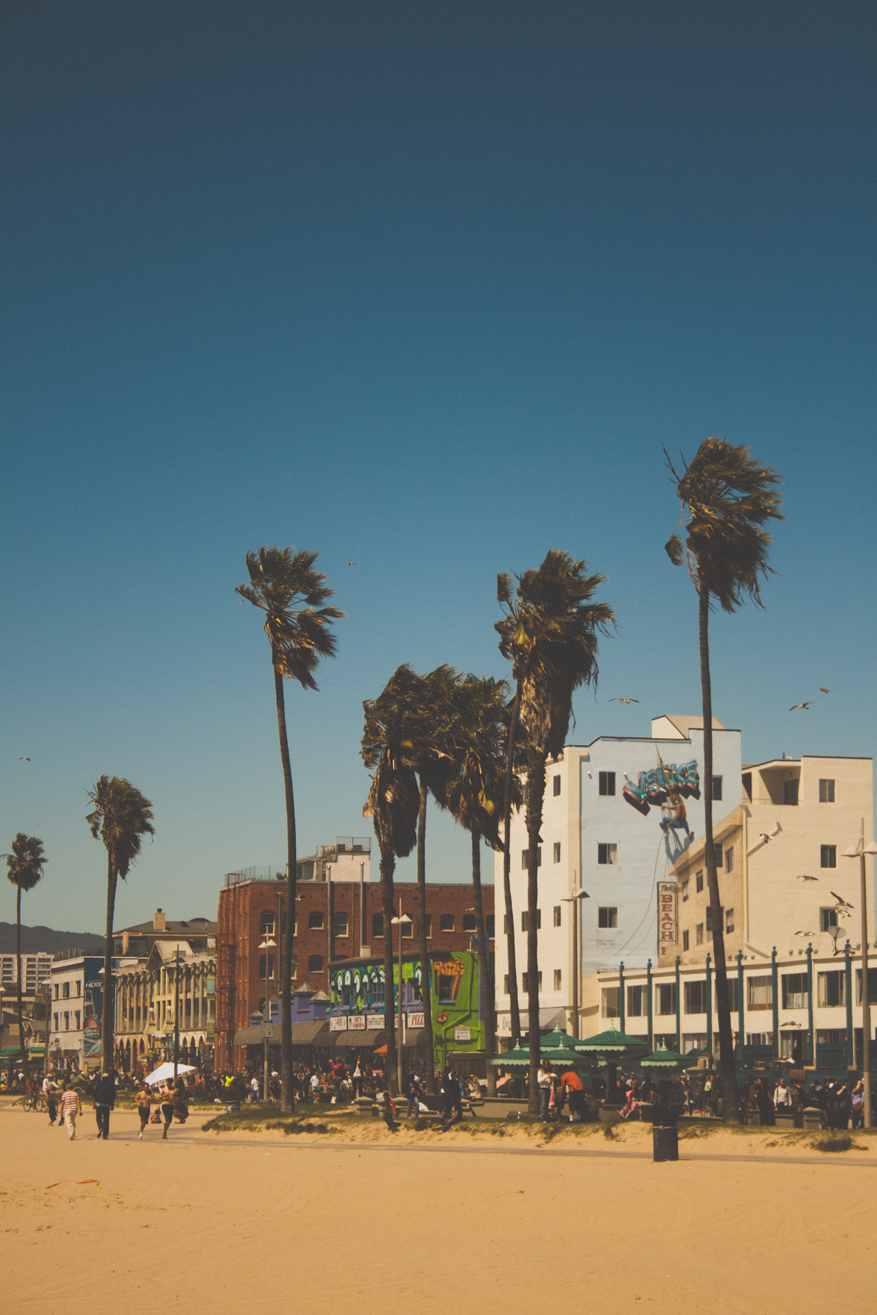 whiskeyblackleather-diamonds:  Venice Beach