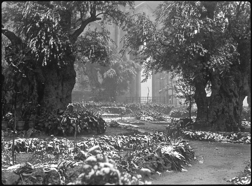 Garden of Gethsemane in snow, Jerusalem, 1938, via Library of Congress.  Not sure what lessons can be gleaned from this, though, except get yourself some super-old, gnarly trees for dramatic effect.