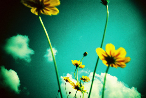 lomographicsociety:  Lomography Camera of the Day - Lomo LC-A