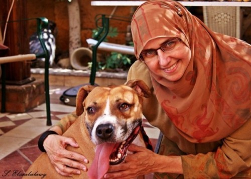 "DOG SAVED FROM EGYPTIAN SHELTER HAS A BIG HEART - ""In a shelter of 700 dogs fighting over food, she watched as Tyson sat back from the pack, letting all of the other dogs eat before he got his share."" A 5-year-old Boxer named Tyson was rescued from an Egyptian dog shelter and currently lives with his owner in Kentucky. He turned out to be very gentle with a big heart, and was subsequently trained and registered as a service dog. Tyson often does good deeds.  Here's more from maysville-online.com:  Castelli said that she and Tyson were taking one of their regular routes down Cox Alley when the dog began pulling her off the road…It was there that Castelli found a denim pocketbook that had clearly been picked through, showing that theft had likely occurred…Using the address from the I.D., Castelli and Tyson made their way to the owner's home. The owner followed Castelli back to the purse, and was overjoyed that it had been found…Tyson's behavior is not surprising. She said that on one of their recent walks, Tyson spotted a small dog locked in a hot car, soaking with sweat from the heat. He refused to leave until Castelli spoke to the owner. Castelli said he is also friendly with all of the neighbors. ""He loves children. If they scream [when playing] he thinks they're hurt,"" she said. ""He's got a big heart."" Tyson is also a registered U.S. Service Dog, and can be used for therapy — he has the badge to prove it. Castelli said that in the past, Tyson helped her mother by pulling her in a wheelchair. He also helps Castelli, who sometimes has panic attacks, remain calm.  Tyson has traveled very far to get where he is today but it seems that he has more than repaid his owner by helping her get through rough times.  Dogs can be very compassionate creatures. Click here for the full story."