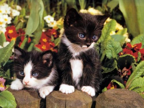 (via Kittens in flowers. Courtesy www.free-pet-wallpapers.com)