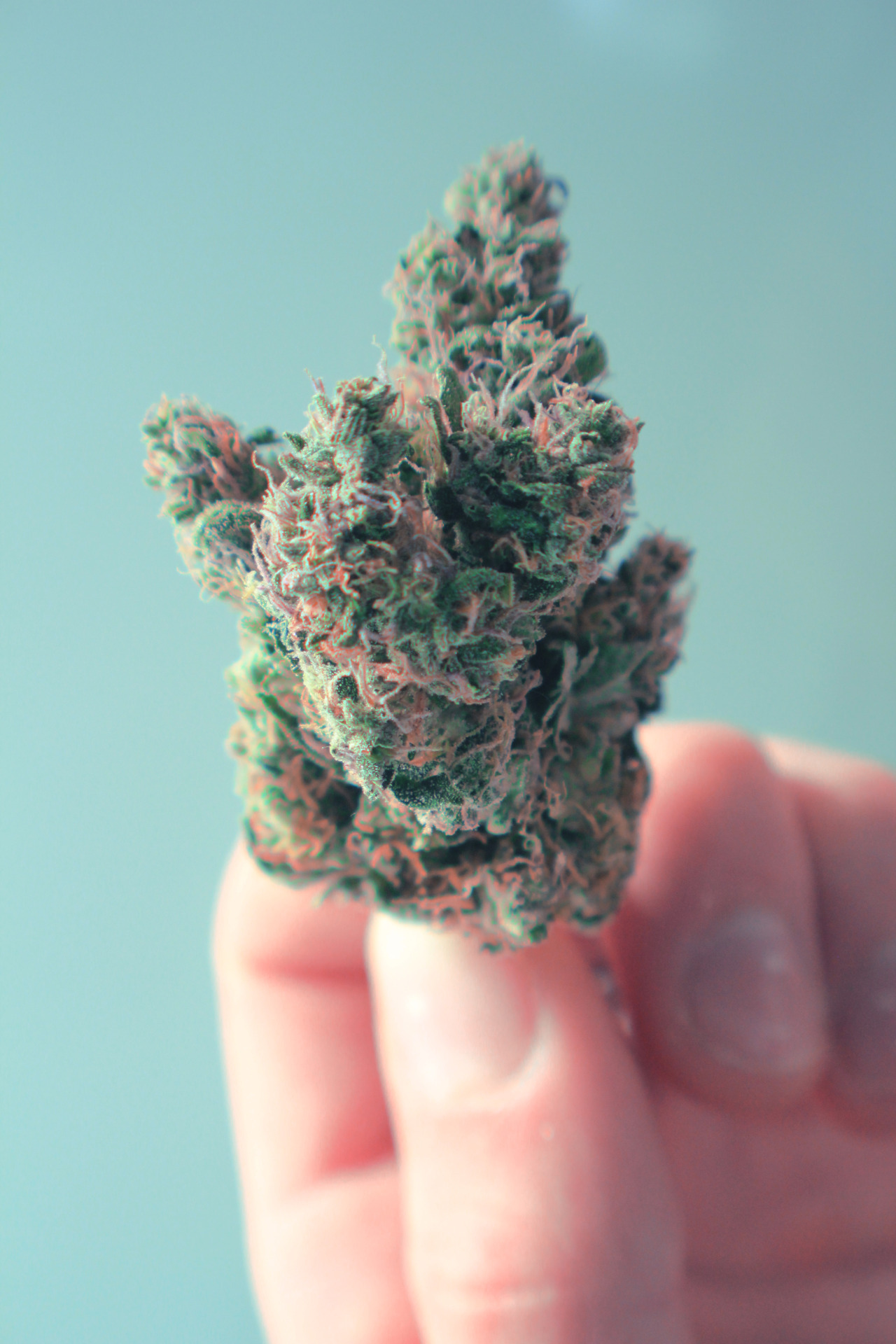 nikolawashere:  Perfect Nug photographed by Nikola Pavlinovic