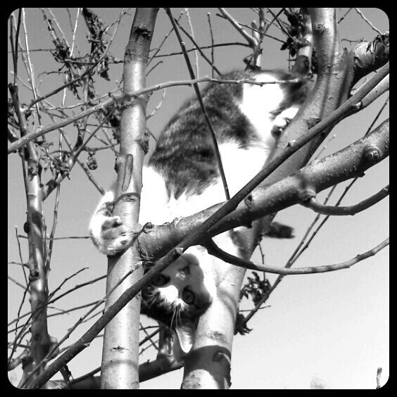 'Peek-a-boo!' Kitty in a tree…#android #CapturedMoment #cat #photography #black-and-white #streamzoo #tree(from @christinefeld on Streamzoo)