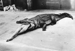 Crocodile Eating Ballerina, from the Pina Bausch Ballet 'Keushleitslegende', Wuppertal, 1983, by Helmut Newton