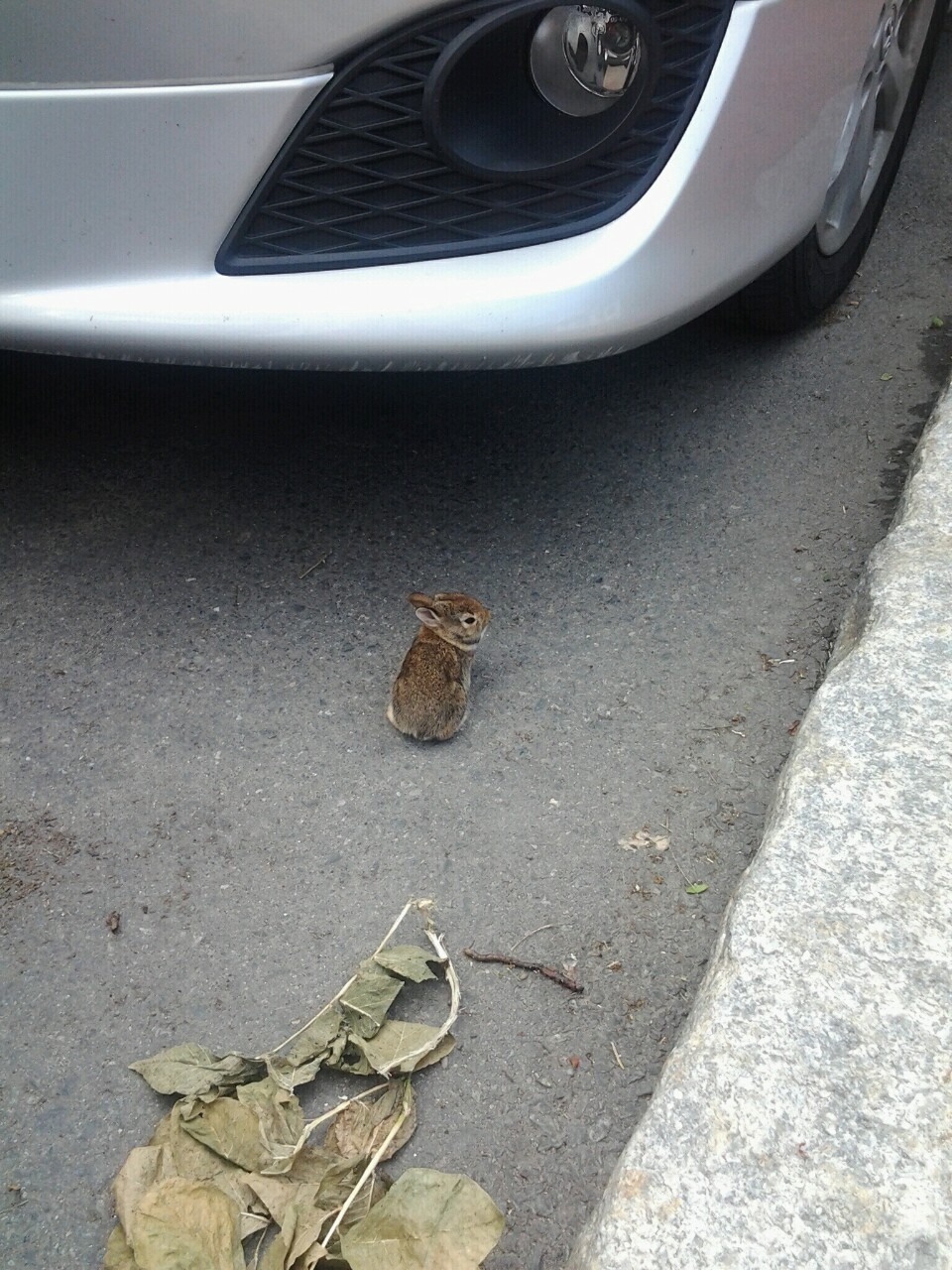 The Tiniest Bunny, as witnessed by Andrei near our apartment.