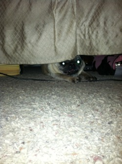 Monsters do live under the bed.