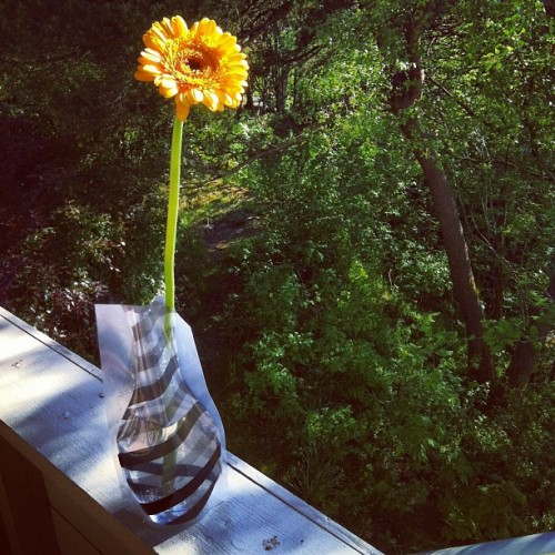 #sunflower in a #plasticwase #flower #summer (Taken with instagram)