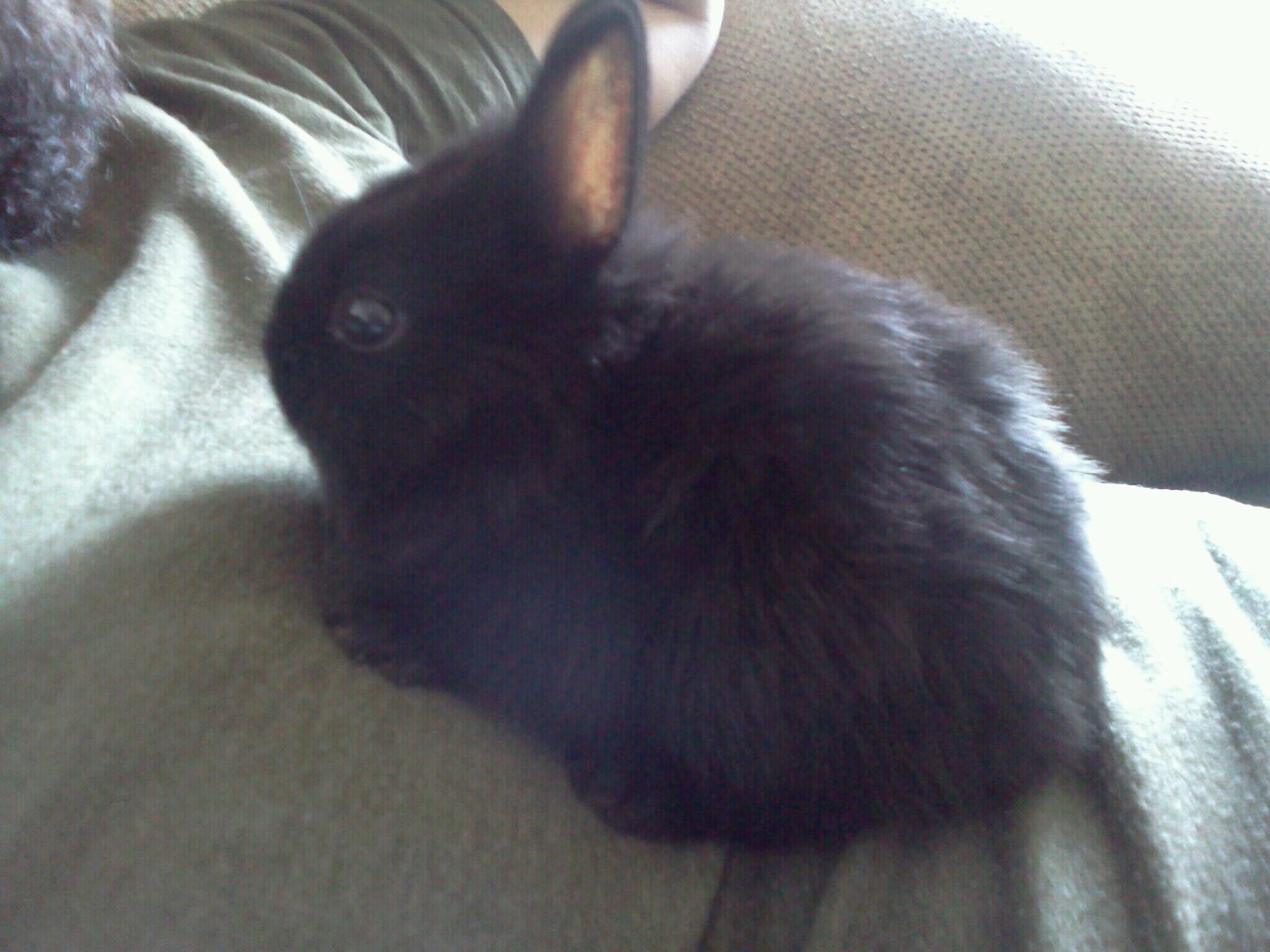 I accidentally got a new baby bunny! Stellaluna.