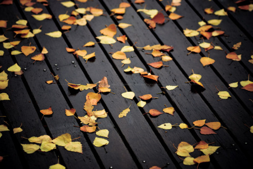 …autumn scatter… (by Geoff…)