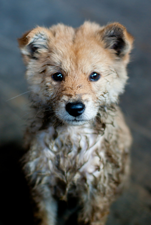 wolfintheforest:  You have a little mud on your fur… Oh there, yeah…you got it.