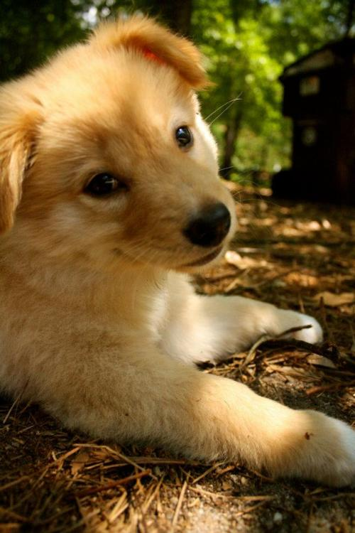 Most photogenic puppy… ever?