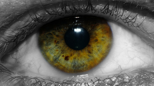 My Eye… It is wet and horrible today, so photographed my eye with a Raynox 250. Not an easy thing to do! Then had a little play with some post processing. ;)