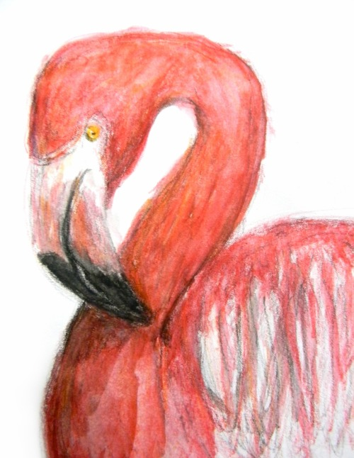 """Flamingo"" Watercolor Pencil"