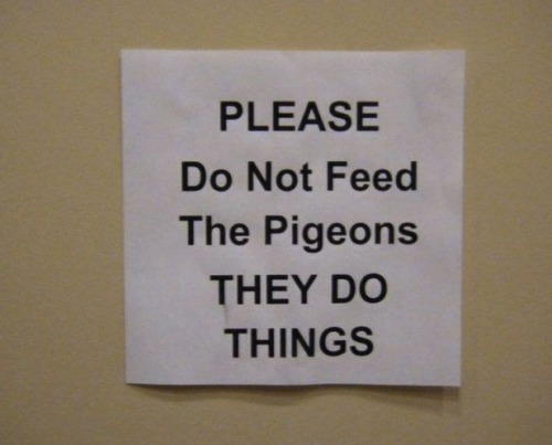 "rabbithugs:  i love how vague this is because it implies that what the pigeons do is too scary to write down ""we cannot bear to tell you what horrors the pigeons have wrought"""
