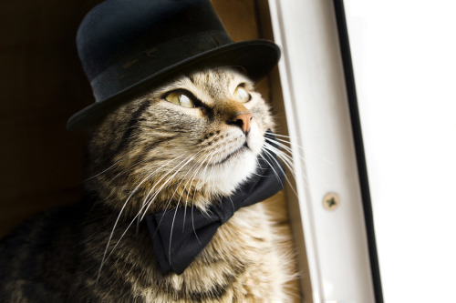 iamthecrime:  Mr. Puss (by Alex Novak)