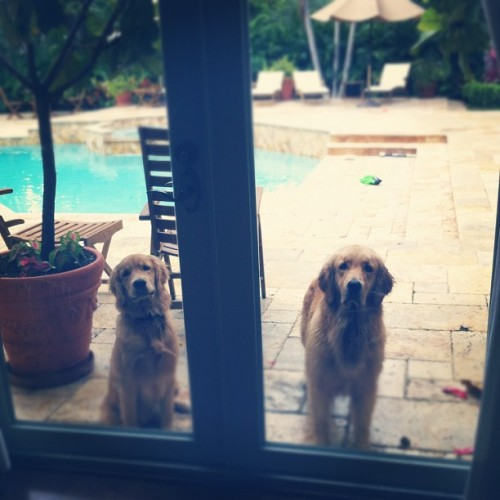 classic let me in look 😊 #classic #cuties #puppies #instagram #2012 #yeswetag #sisters #family  (Taken with Instagram)