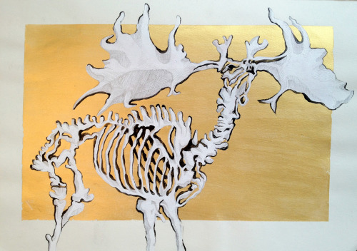 kerenhasson:  Megaloceros Project study Acrylic and Pencil 2011