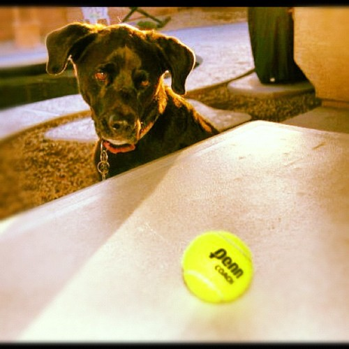 #dog (Taken with Instagram)