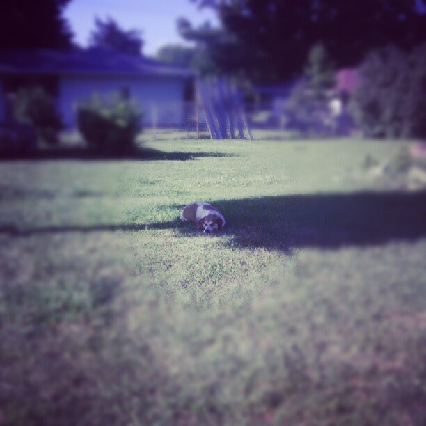 A lazy day in the grass… (Taken with Instagram)