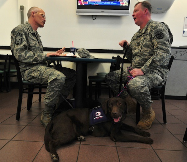 dogblessusa:  Paws for Purple Hearts was the first program of its kind to teach Wounded Warriors with PTSD to train service dogs for their comrades-in-arms with combat-related mobility impairments. Founded in 2006 as a research program of Bergin University, PPH has operated our successful program at the Walter Reed National Military Medical Center, the National Intrepid Center of Excellence for PTSD, Ft. Belvoir, Virginia and continues it's flagship program at the Palo Alto/Menlo Park VA Medical Center in California. Over 300 Wounded Warriors have participated in our programs and we regularly place these trained service dogs with Wounded Warriors across the country. PPH recently reached a milestone this spring when for the first time, we placed two service dogs (Corporal Niles and Corporal Yoko) with active duty Wounded Warriors from the U.S. Army and the U.S. Air Force at a ceremony at Ft. Belvoir, Virginia. If you're in DC, be sure to say hi to Niles at the Pentagon and Yoko at Bolling Air Force Base in Washington, D.C. where they accompany their new partners at work defending our Country! — Guest post by Paws for Purple Hearts