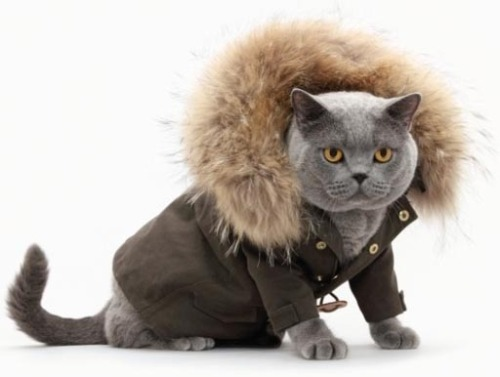 getoutoftherecat:  get out of that coat cat. i don't see this modelling career going anywhere.