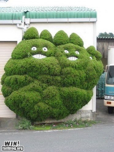 Best hedges ever!!