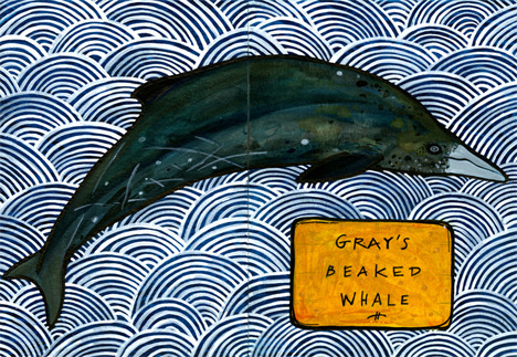 "heybeast12:  365 Critters - Day 79 - Gray's Beaked Whale - Sabrina - Corvallis, OR Follow and ""like"" this project on Hey Beast Studio's Facebook."