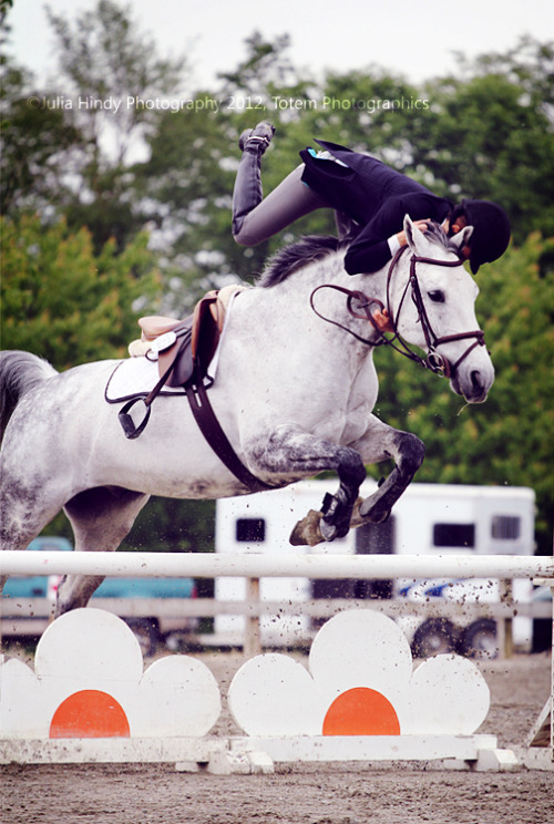 showjumperer:  lifelongequestrian:  mortalhybrid:  That's not how you do it.  me  Oh hey horse that's a pretty flower here drop me off and ill have a look you keep going k