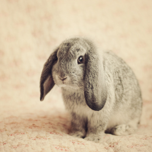 llbwwb:  For the Bunny Lovers :) by Megan