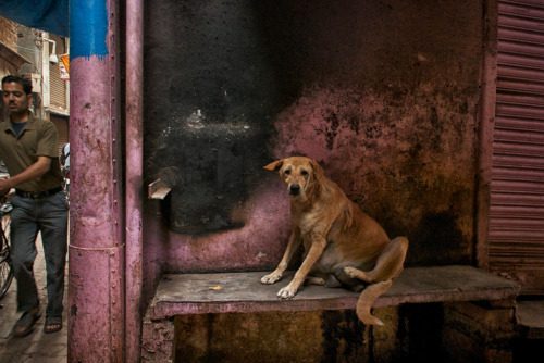 Man's best friend in India , well maybe not.