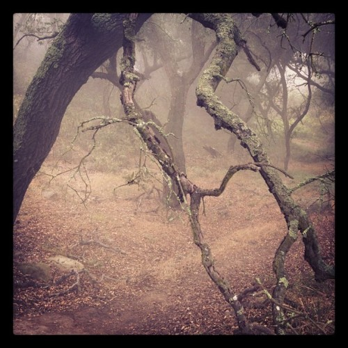Forest Fog #nature #woods #leaves (Taken with Instagram)