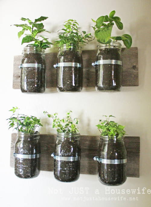 Best way to watch herbs grow. xo, Rodene http://rodene.wordpress.com/