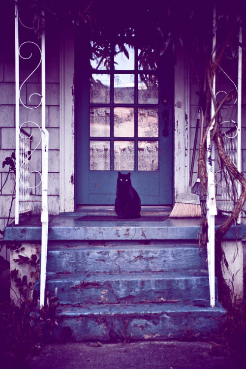 neonwerewolf:  The Black Cat.