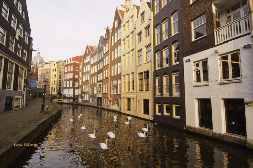 allthingseurope:  Afternoon in Amsterdam (by Sau.Rieng)