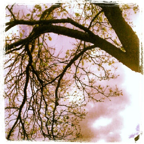 Winter sky #imacitychanger #perth  (Taken with Instagram)